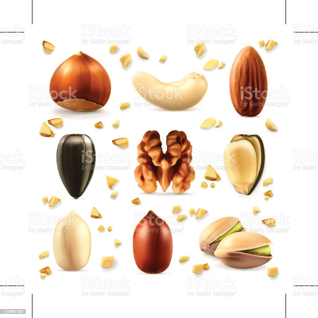 Nuts, vector icon set vector art illustration