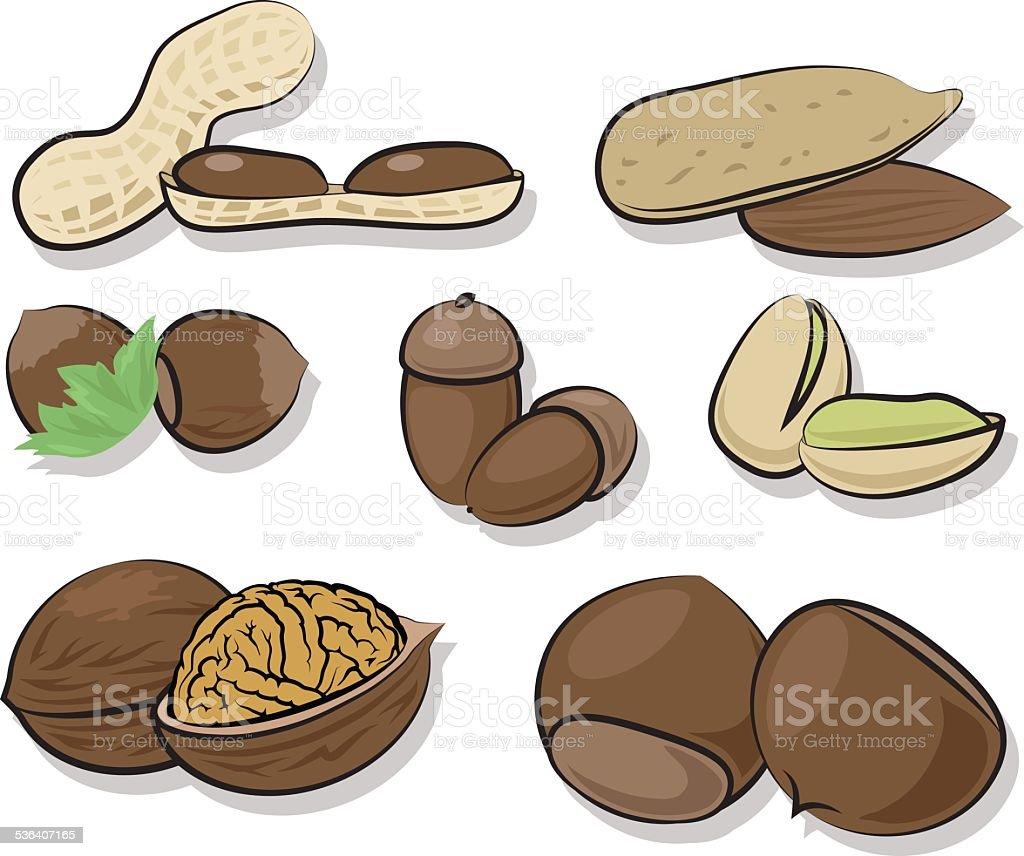 Nuts vector art illustration