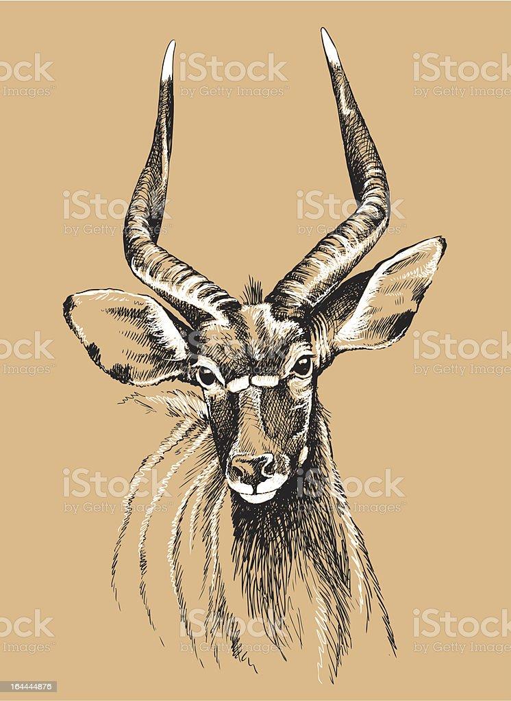 Nyala sketch vector art illustration