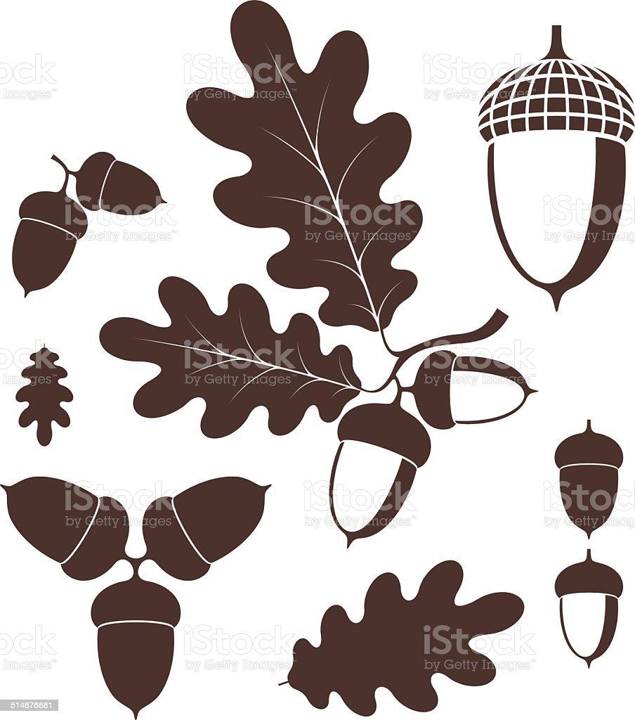 Oak. Acorn vector art illustration