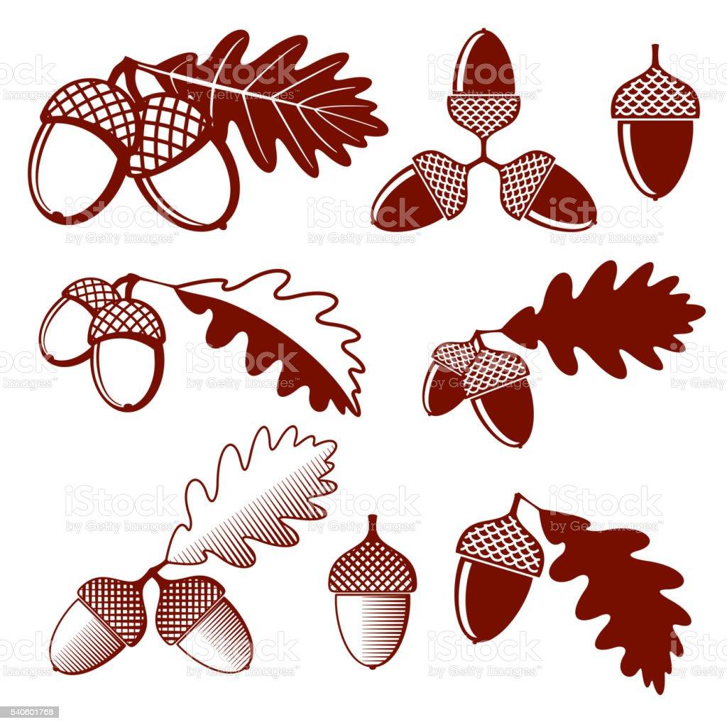 Oak acorns and leaves vector set vector art illustration