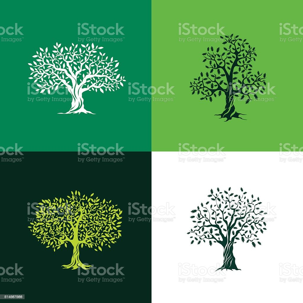 oak and olive trees vector art illustration