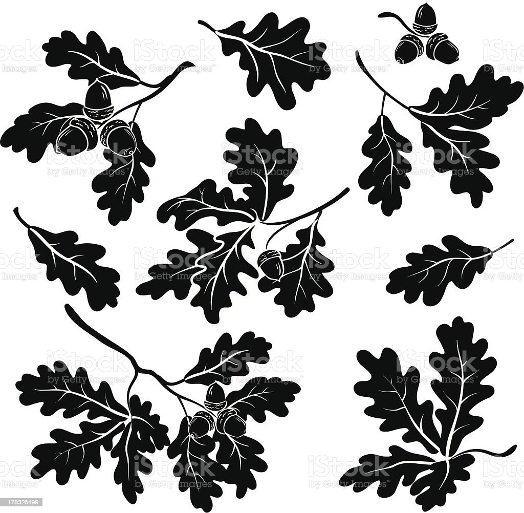 Oak branches with acorns, silhouettes vector art illustration