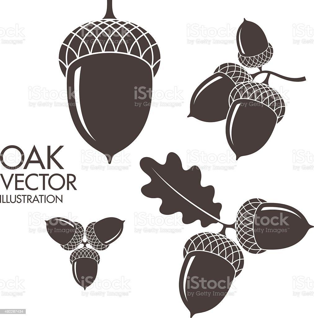 Oak. Isolated acorns on white background vector art illustration