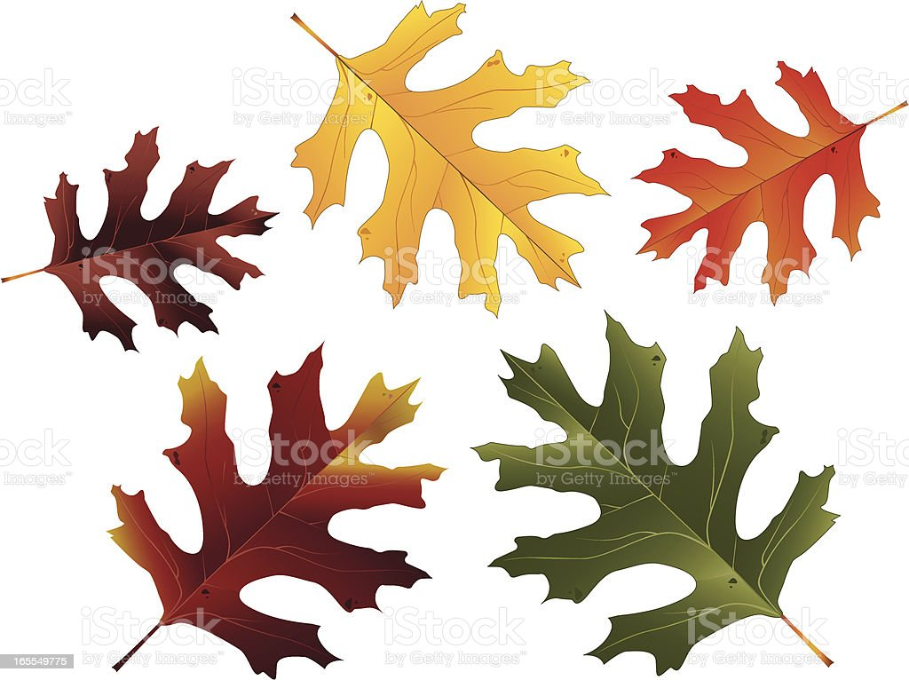 Oak Leaves royalty-free stock vector art