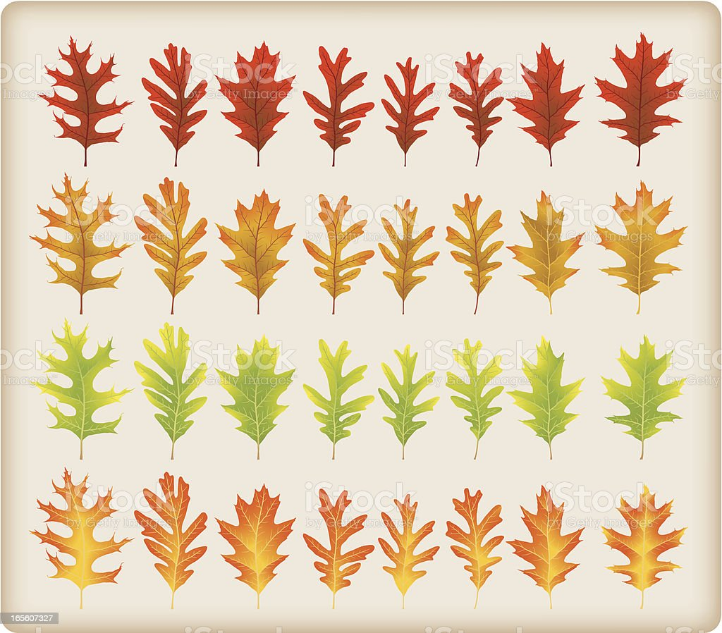 Oak leaves (no meshes!) royalty-free stock vector art