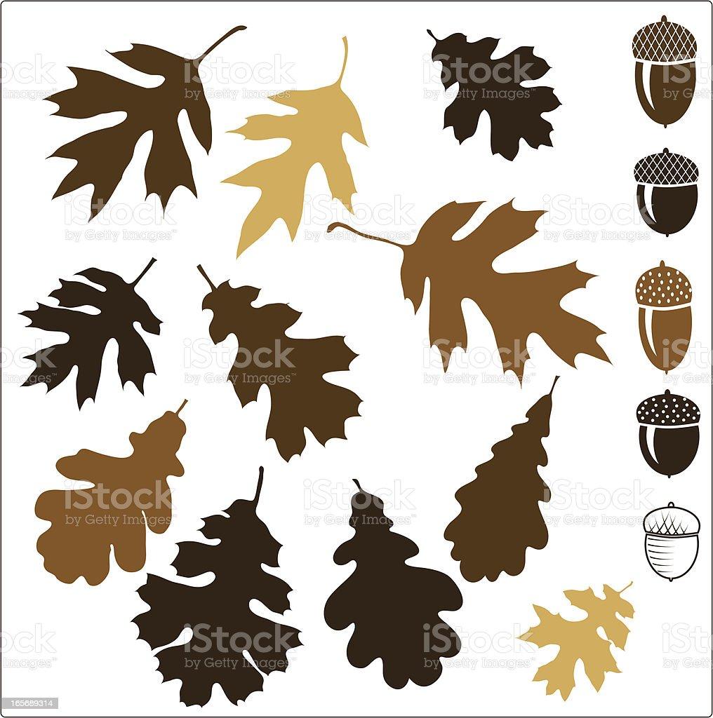 Oak leaves vector art illustration