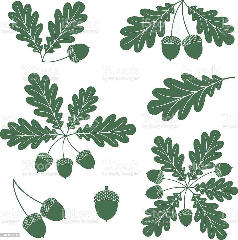 Oak leaves with acorns in green vector art illustration