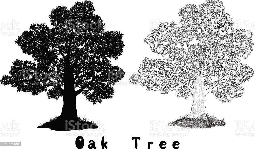 Oak Tree Silhouette, Contours and Inscriptions vector art illustration