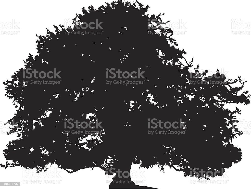 Oak tree silhouette vector vector art illustration