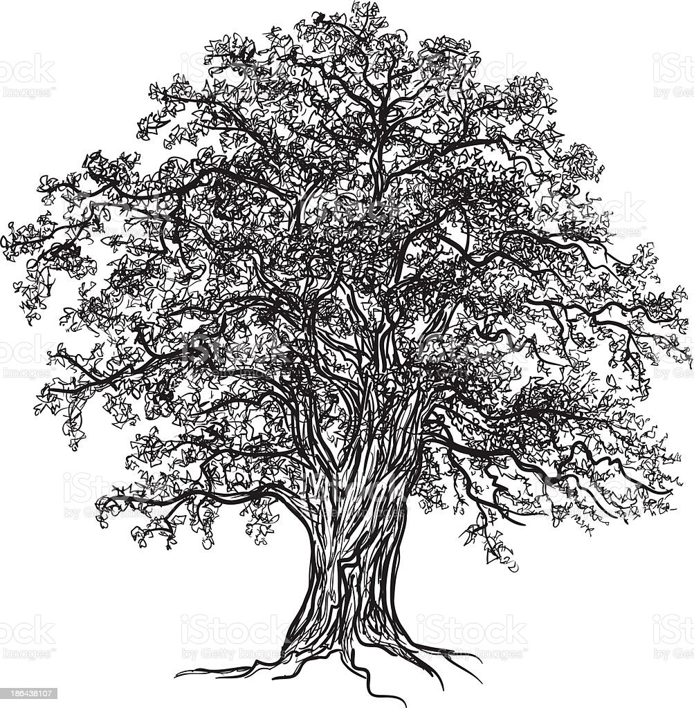 Oak tree vector art illustration