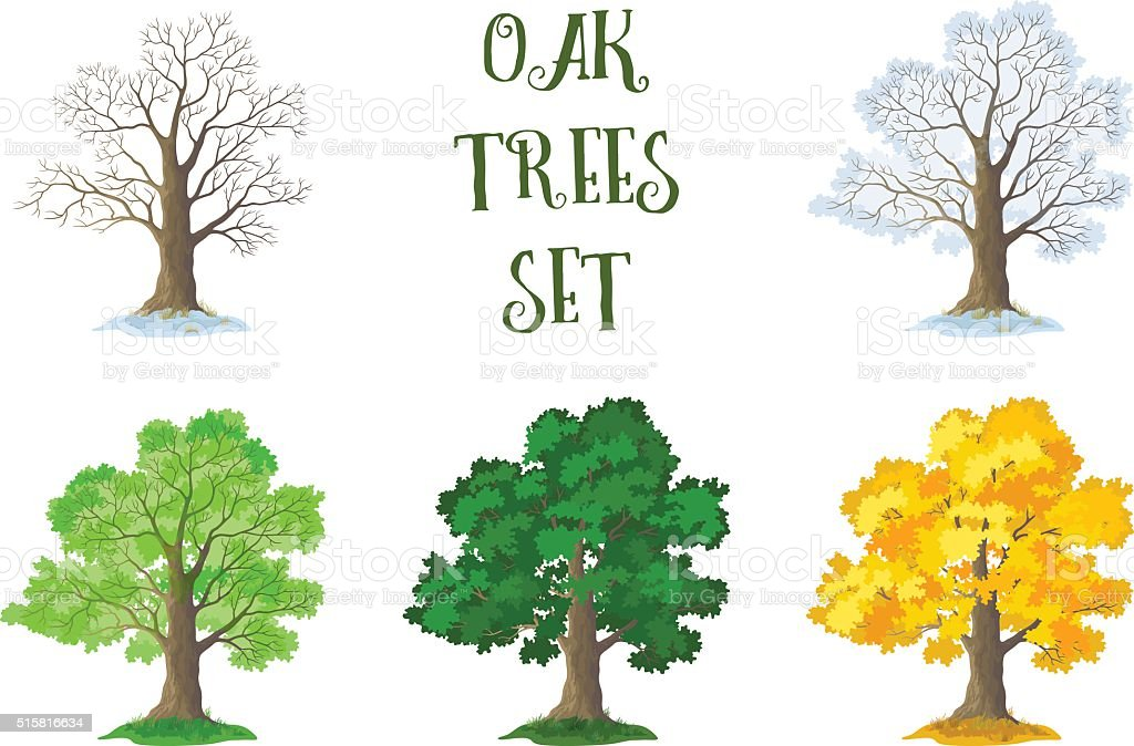 Oak Trees Set, Seasons vector art illustration
