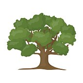 Oak vector icon in cartoon style for web