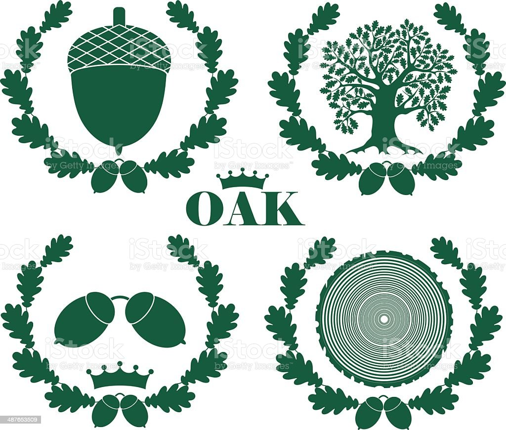 Oak vector art illustration