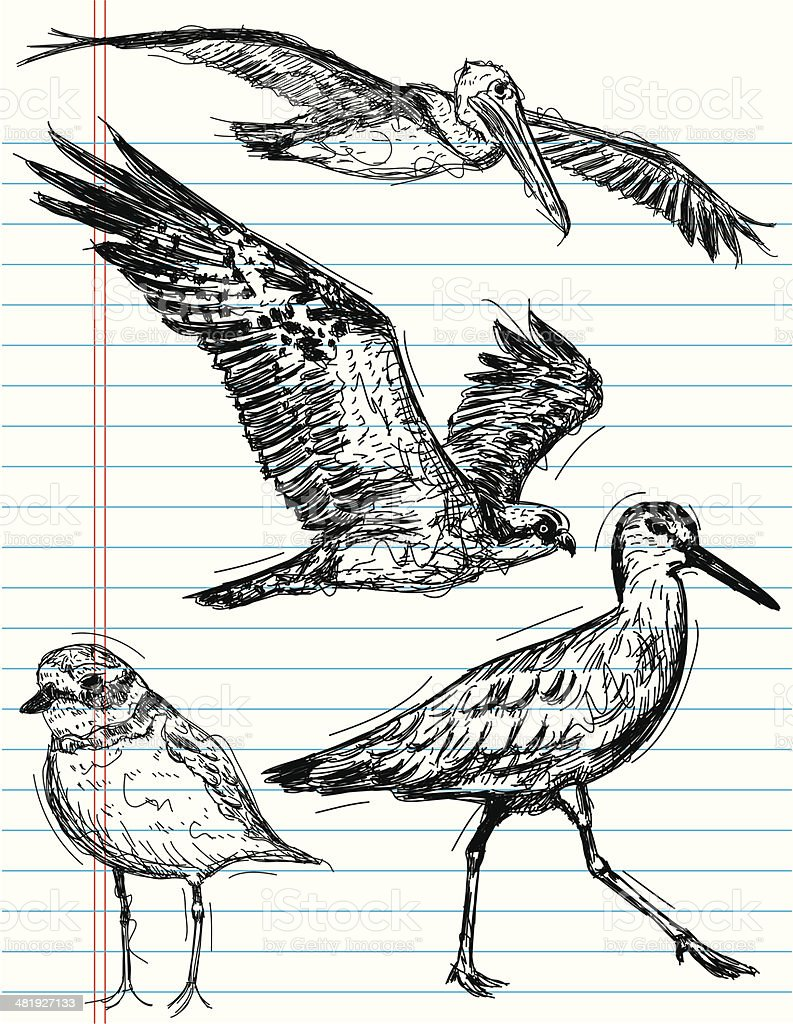 ocean bird sketches vector art illustration