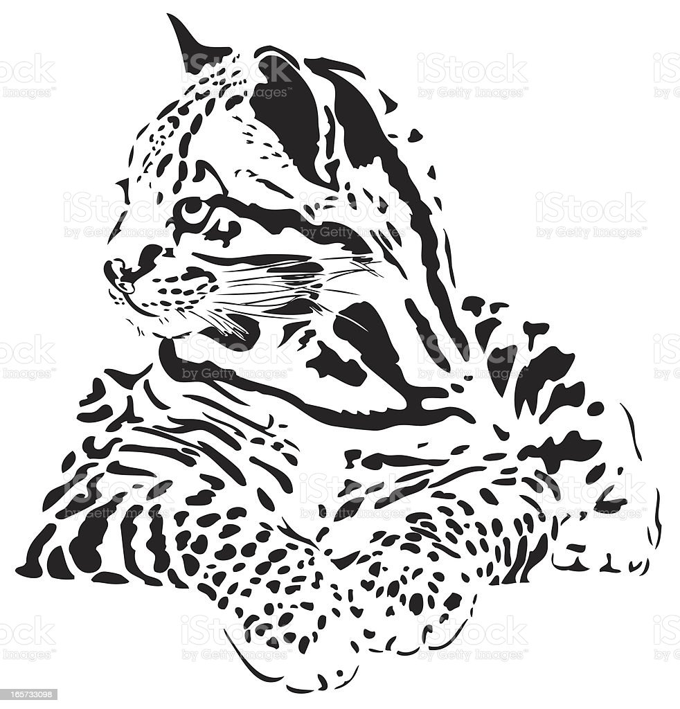 Ocelot illustration royalty-free stock vector art