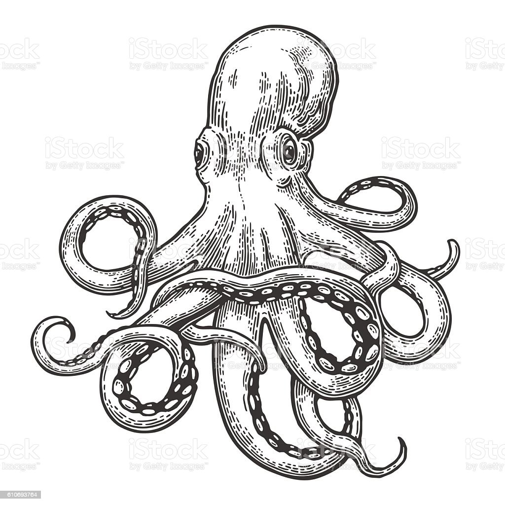 Octopus. Sea Monster vector art illustration