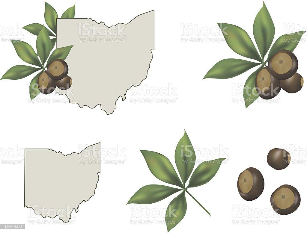 Ohio State Buckeyes vector art illustration