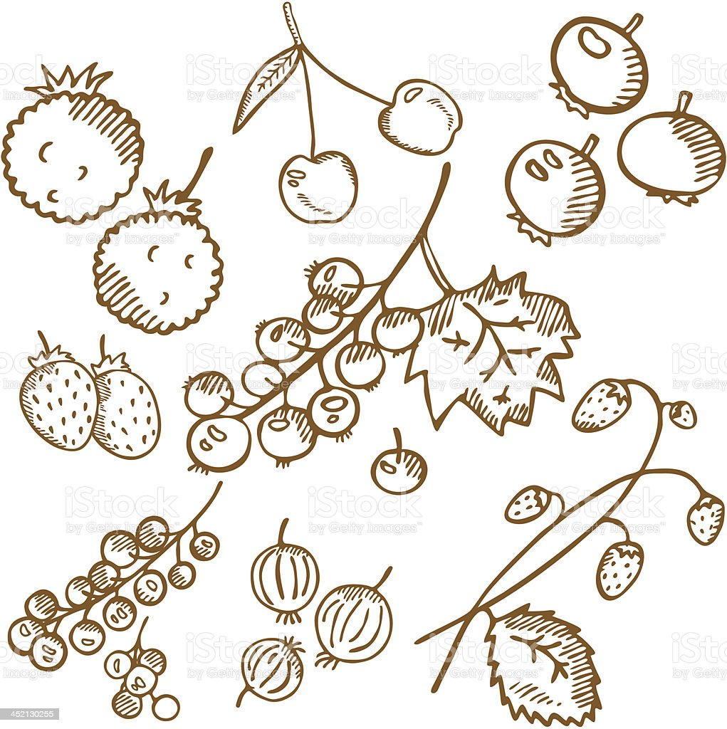 Old fashioned berries set. Hand drawn illustration. royalty-free stock vector art