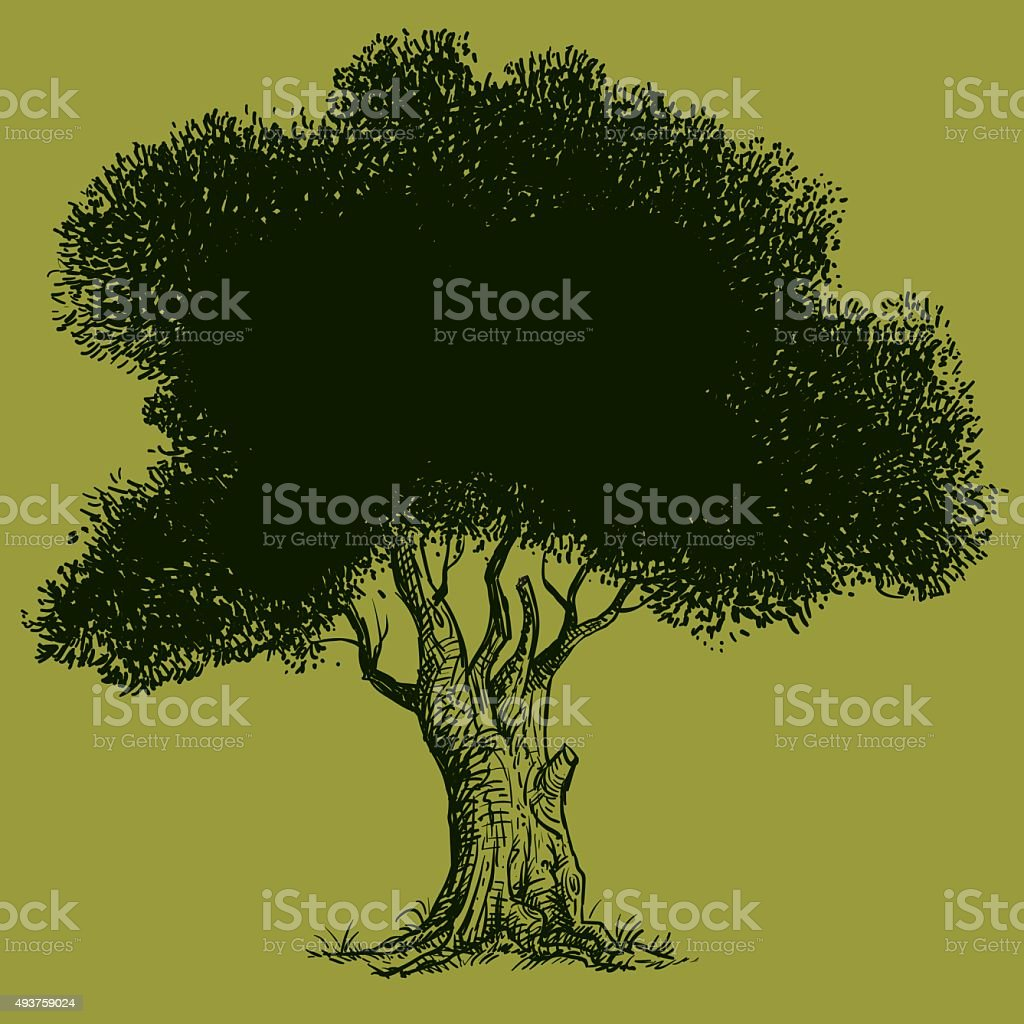 Old Olive Tree vector art illustration