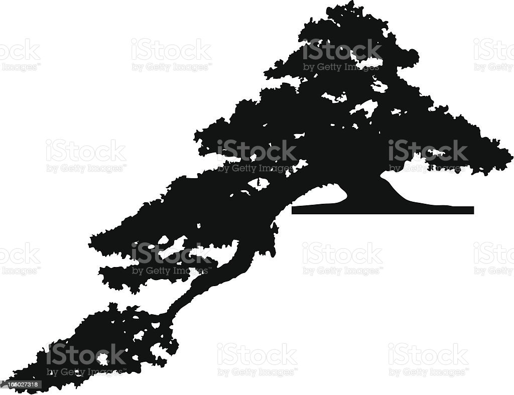 Old pine tree, Vector royalty-free stock vector art
