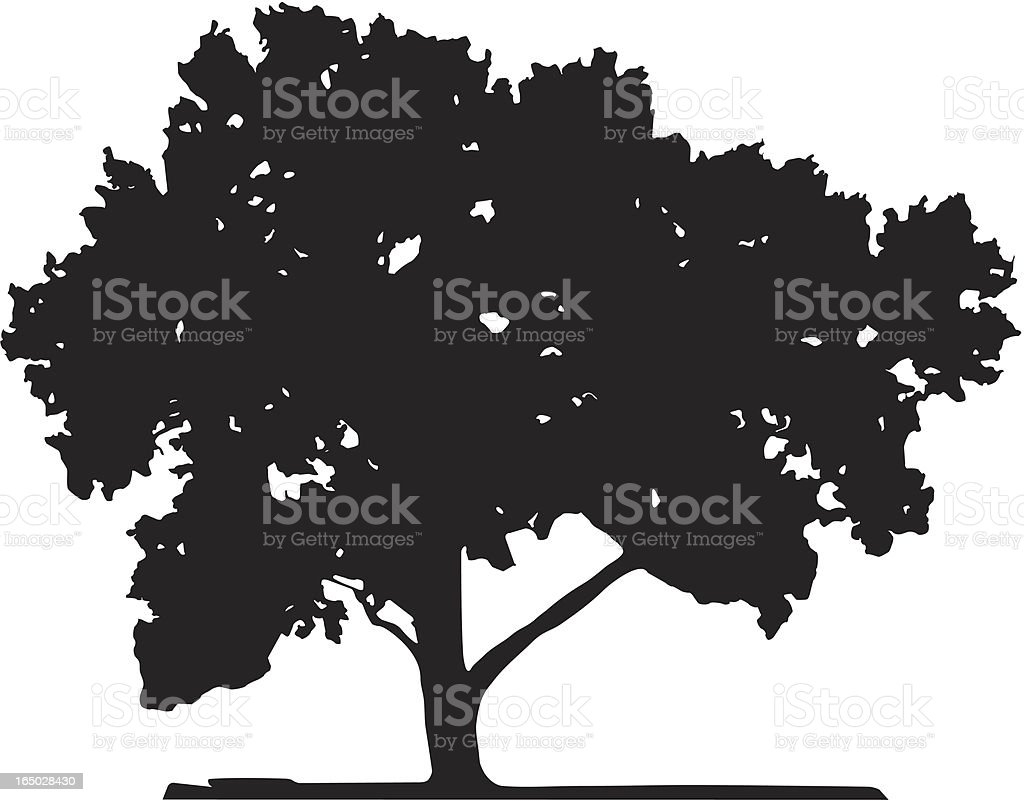 Old poplar, Vector vector art illustration