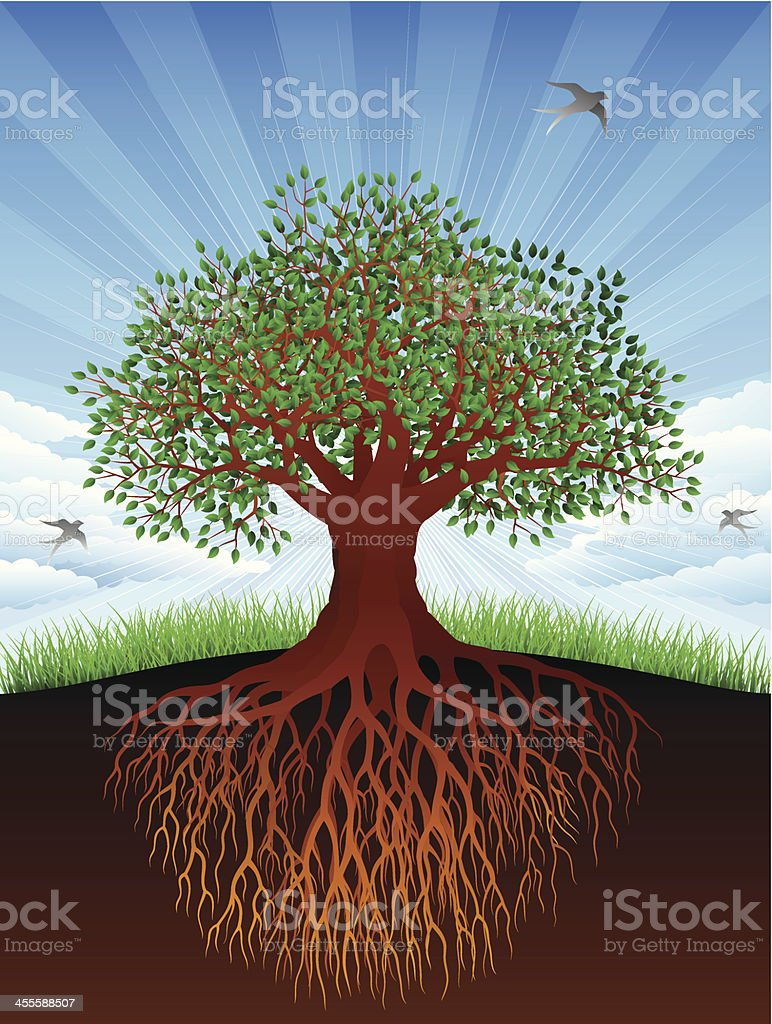 Old Tree and Roots royalty-free stock vector art