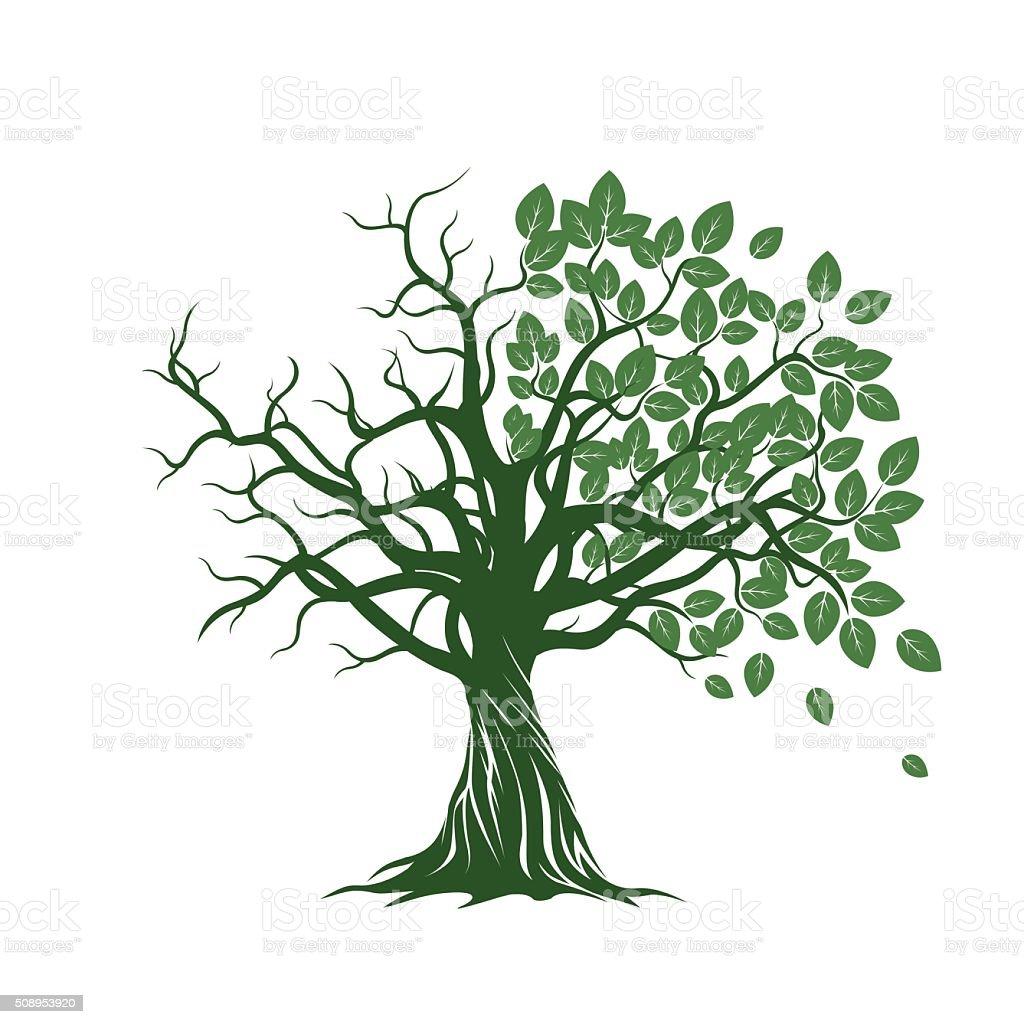 Antiguo rbol con verde hojas ra ces ilustraci n de vectores illustracion libre de derechos - Arbre sans racine envahissante ...