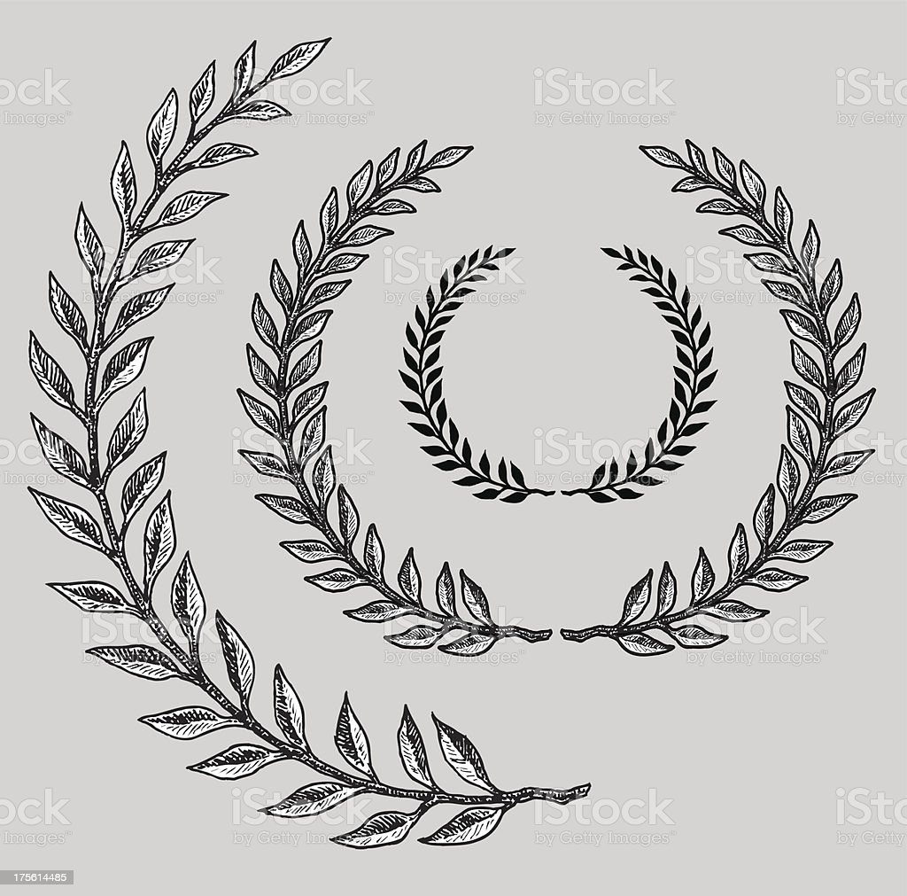 Olive Branch vector art illustration