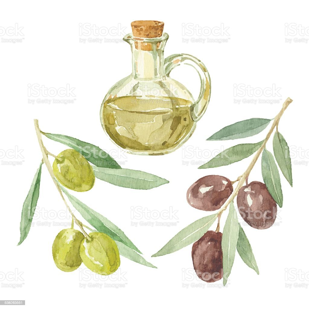 Olive branches and a bottle  by watercolor. vector art illustration