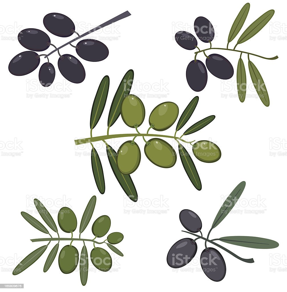 Olive Branches royalty-free stock vector art