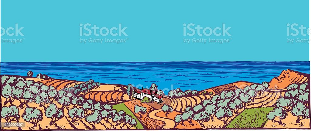 Olive grove vector art illustration