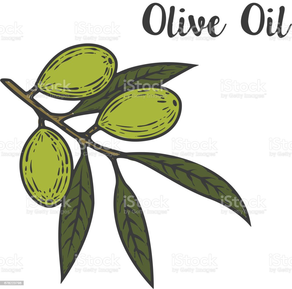 olive oil illustration. Design element for  label, emblem, sign, poster. Vector illustration. vector art illustration