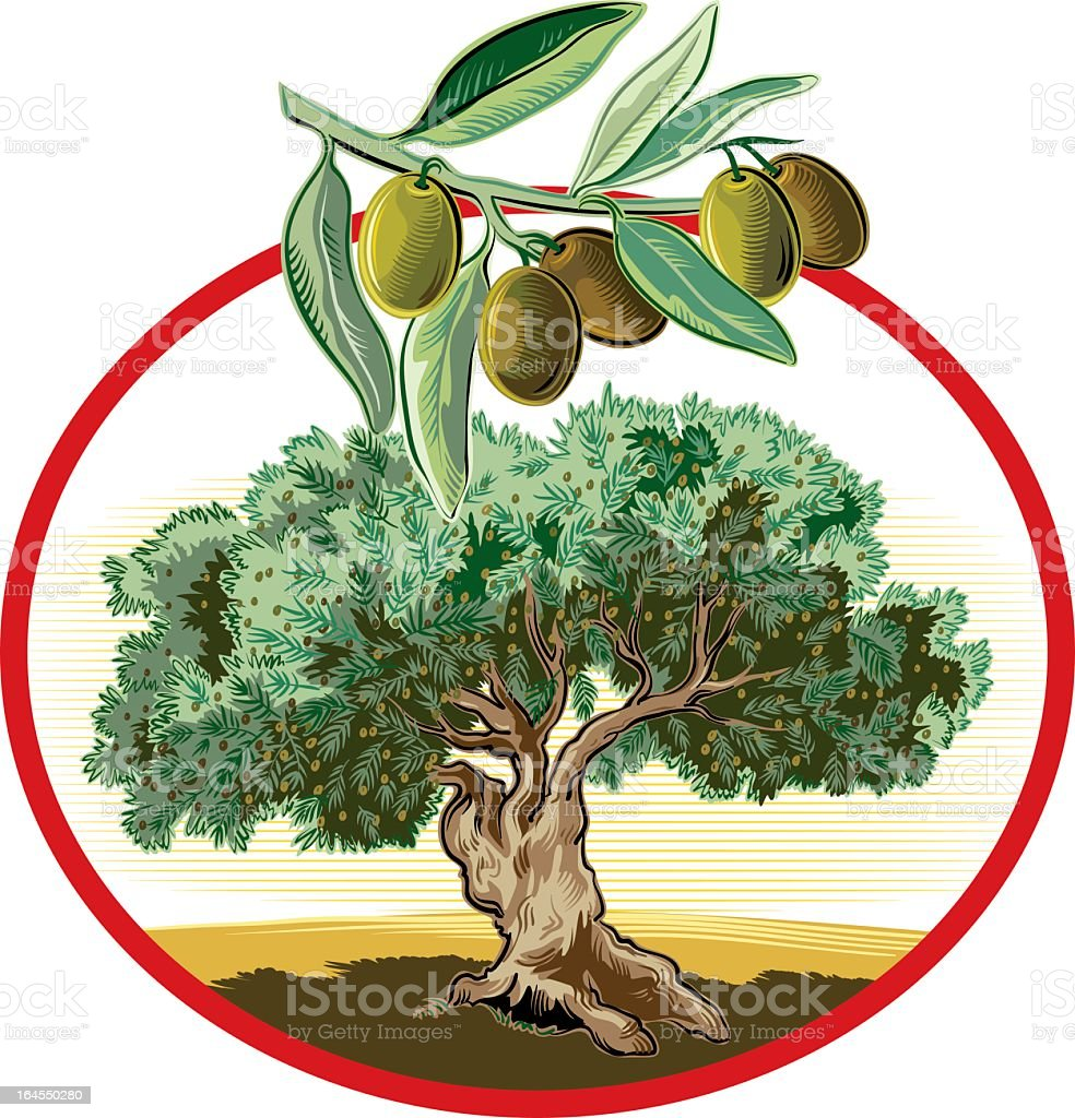 olive tree in circular frame royalty-free stock vector art