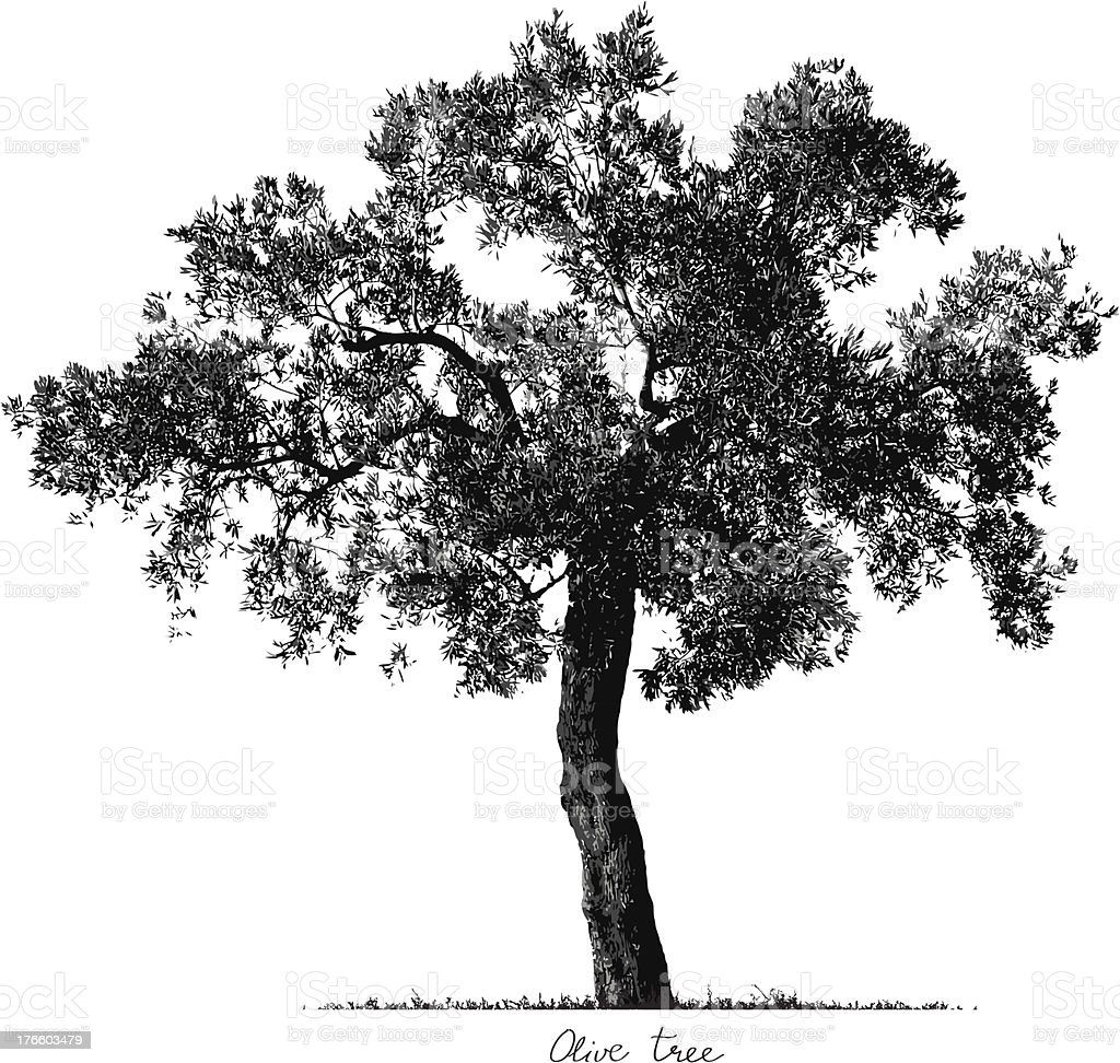 Olive Tree silhouette vector art illustration