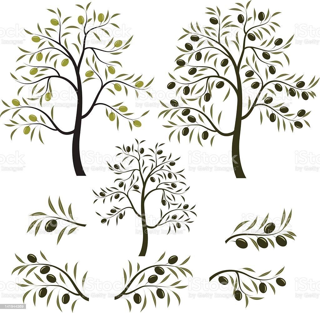 olive tree royalty-free stock vector art