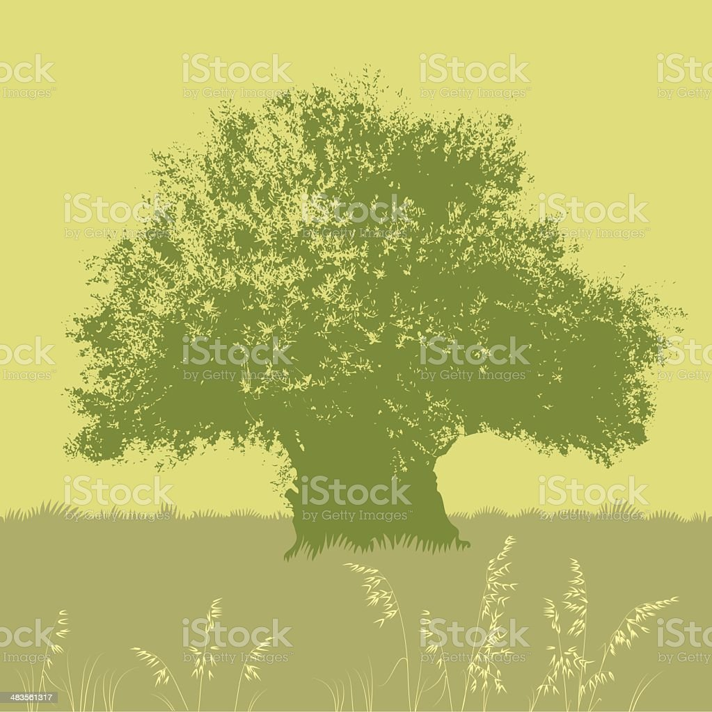 Olive tree royalty-free stock vector art