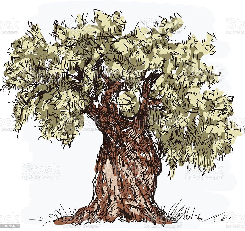 olive tree vector art illustration