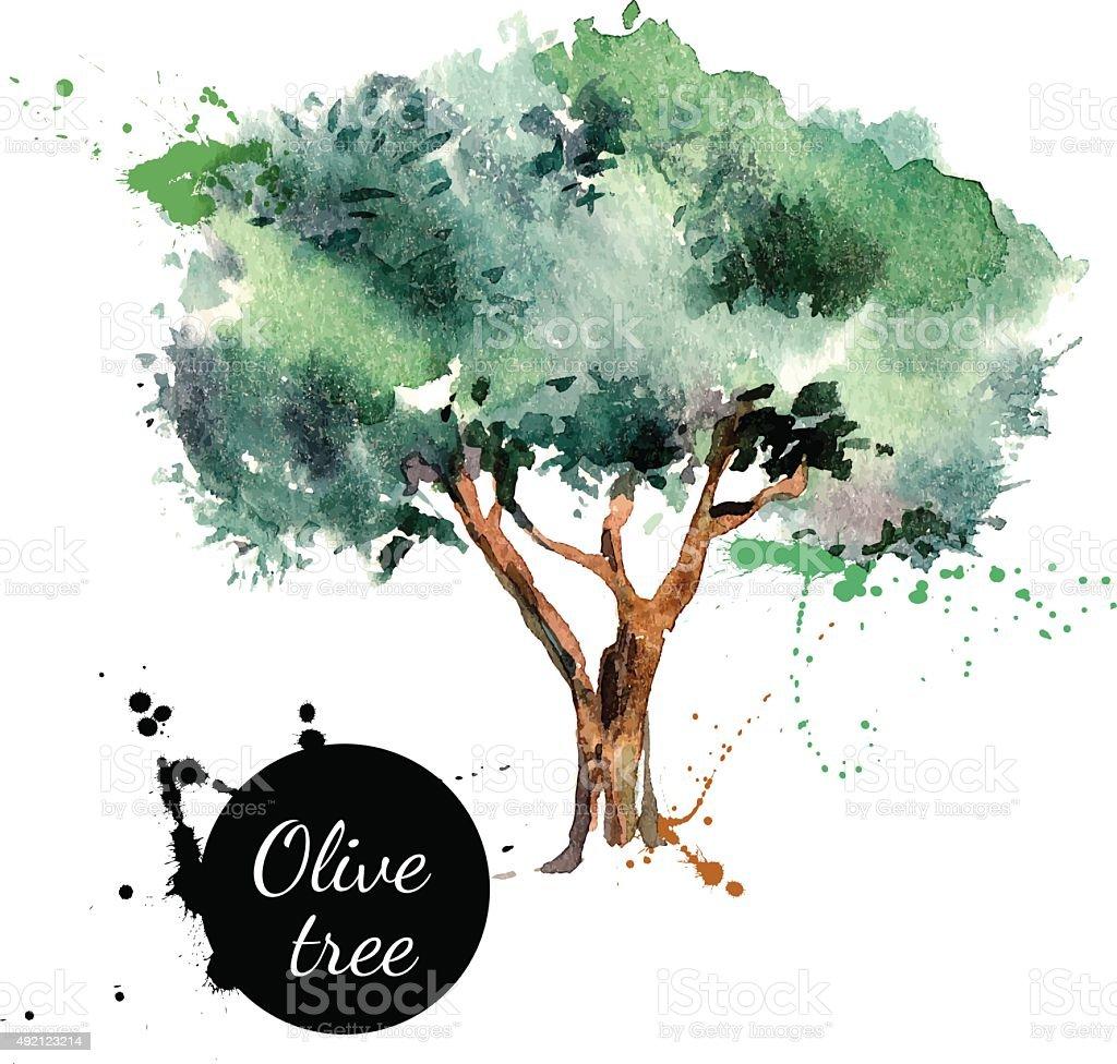 Olive tree vector illustration. Hand drawn watercolor painting o vector art illustration