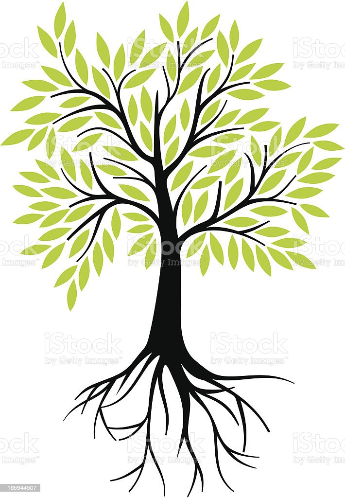 Olive tree with roots vector art illustration