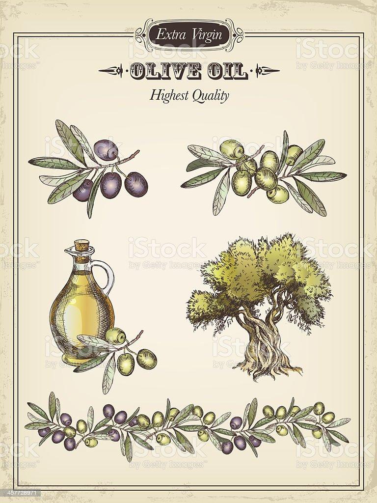 olive vector art illustration