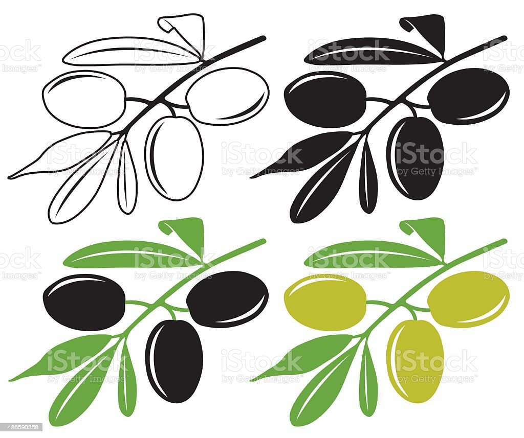 Olives on a branch in color and black and white vector art illustration
