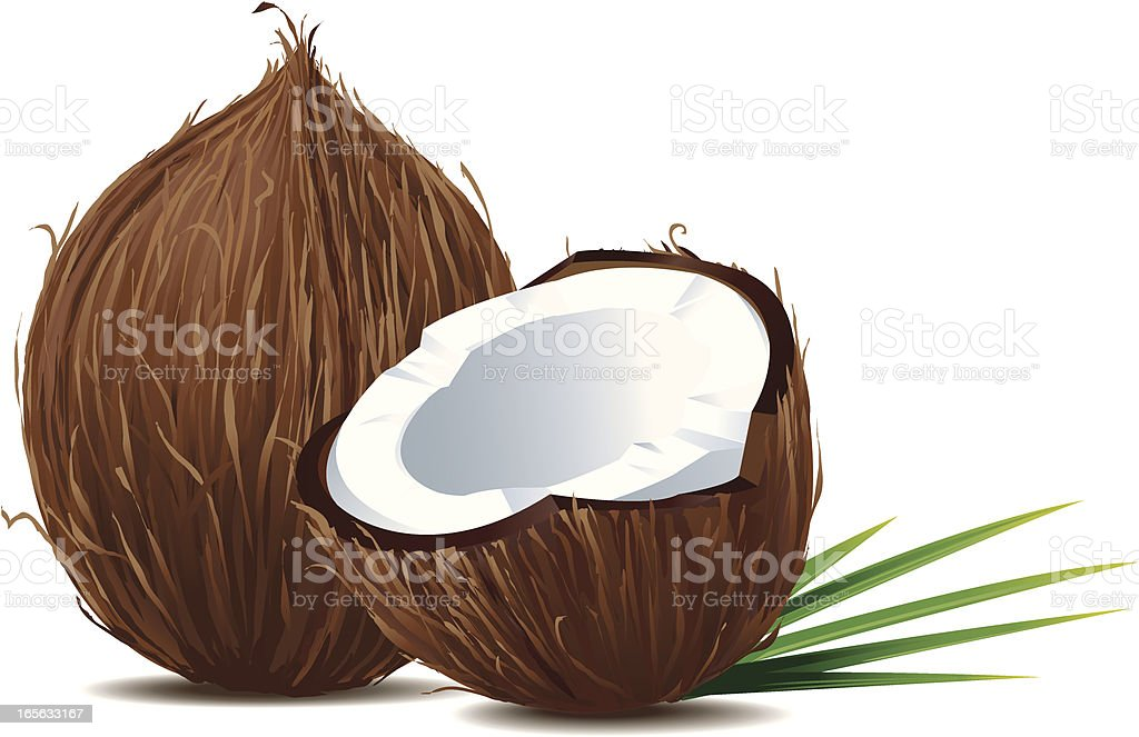 One and a half coconut with palmleaves vector art illustration