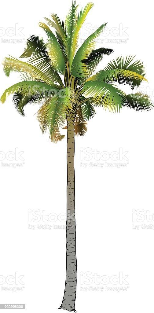 One palm tree. vector art illustration