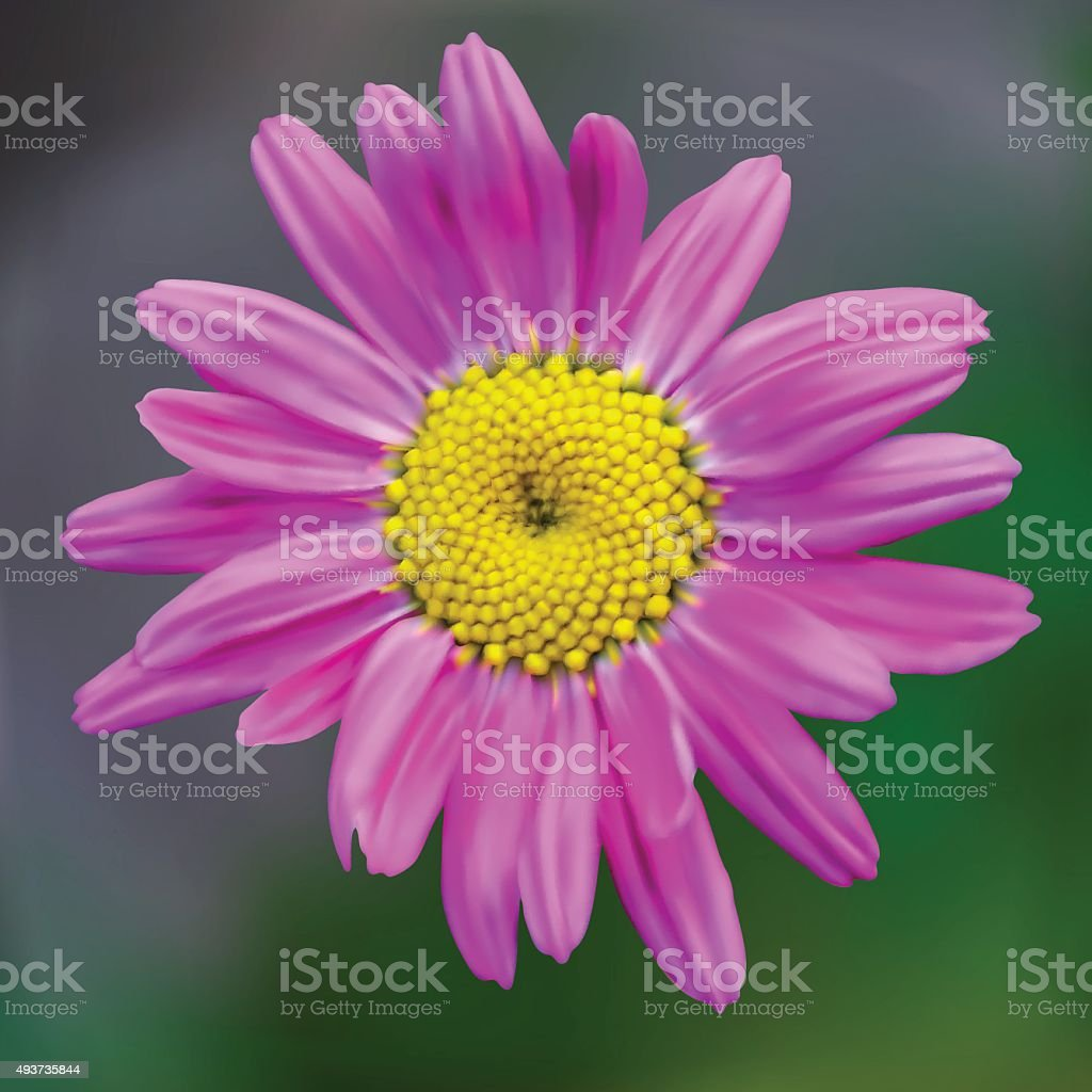 One purple daisy on a green background vector art illustration