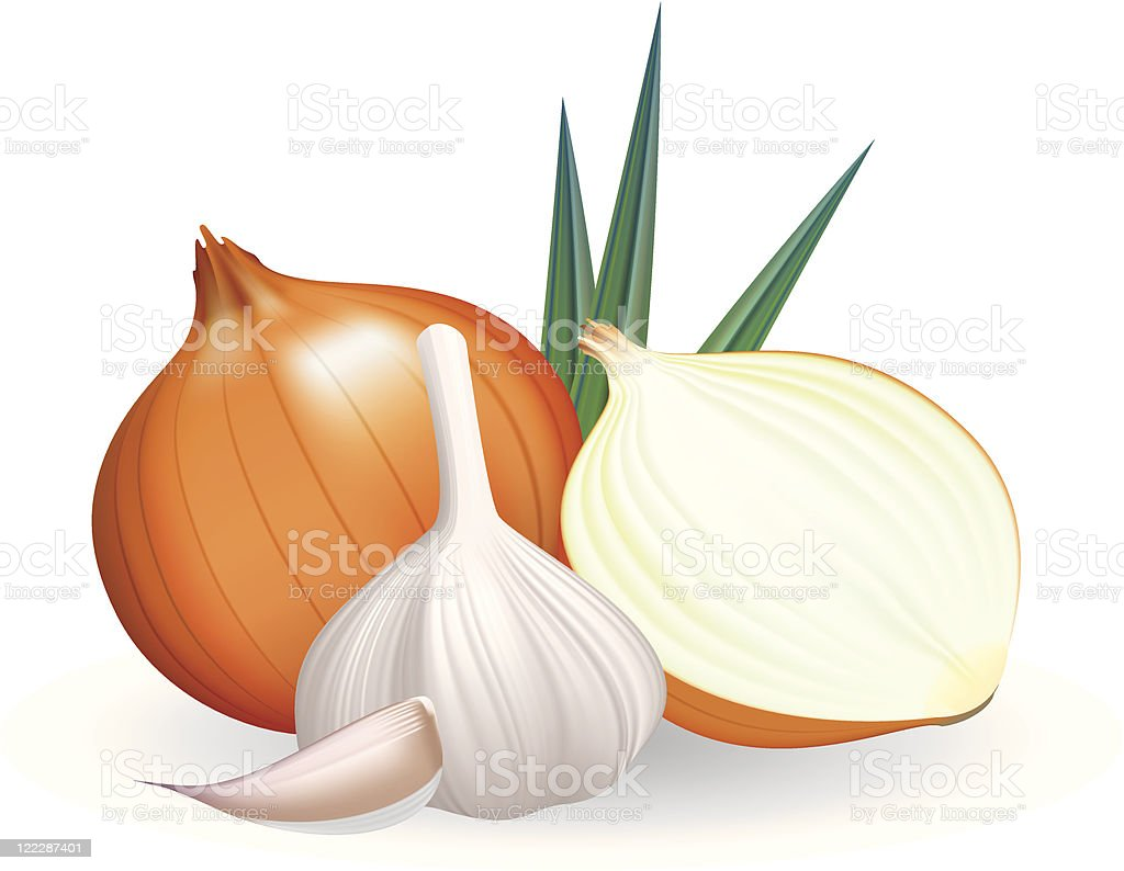 Onion and garlic. royalty-free stock vector art