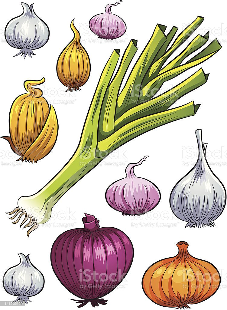 Onion Collection royalty-free stock vector art