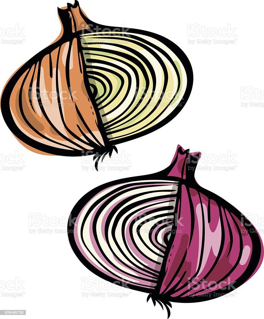 Onion Doodle vector art illustration