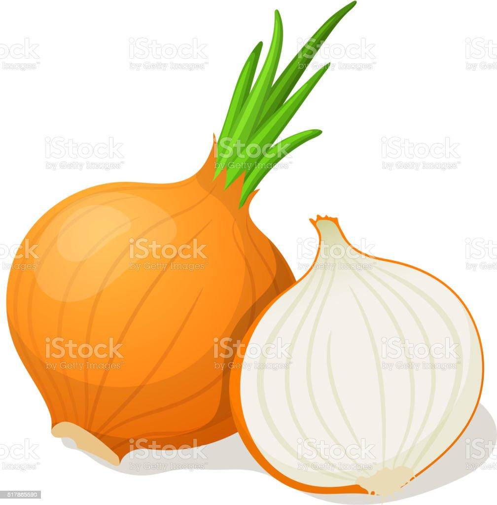 Onion isolated on white. Vector illustration vector art illustration