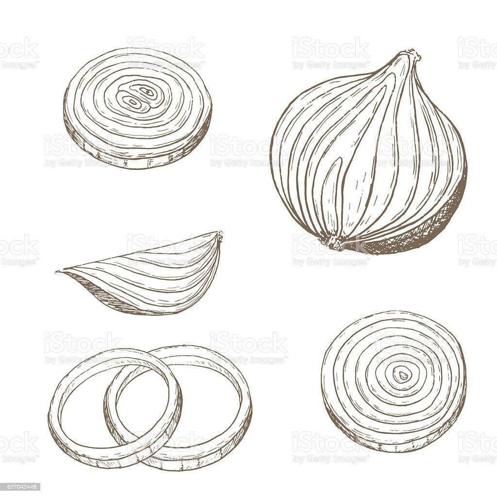 Onion  rings set vector art illustration